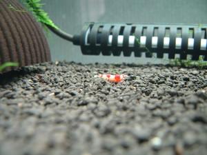 20060623S抱卵-2.jpg